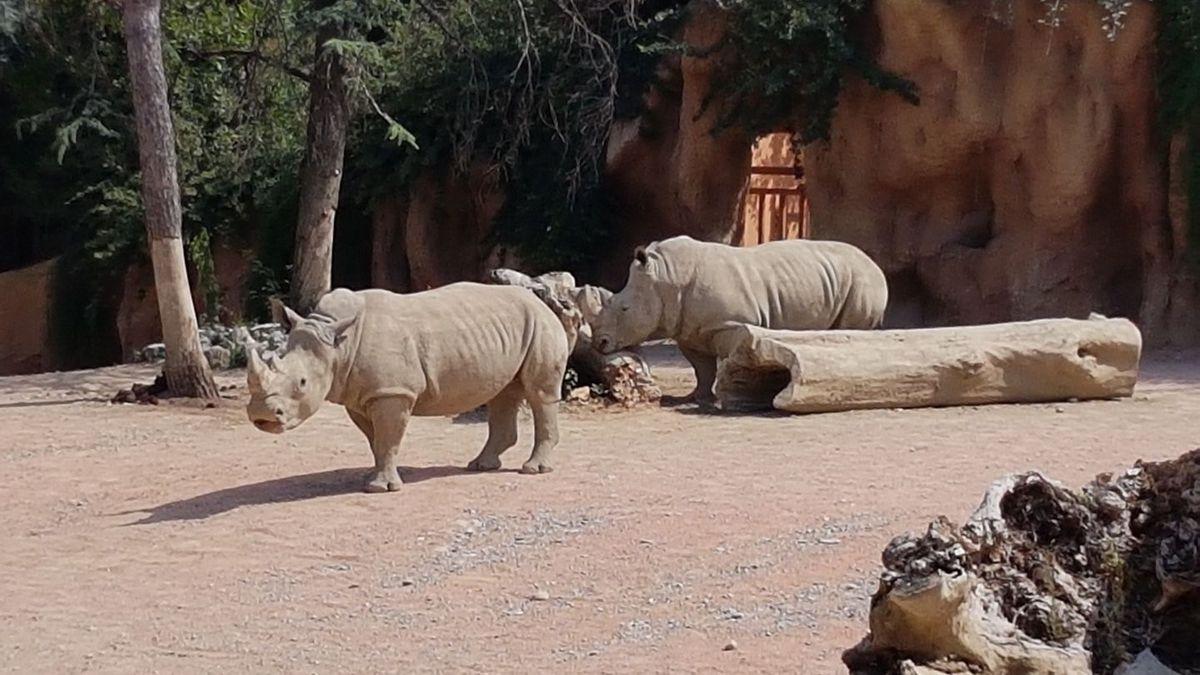 rinoceronti-parco-cornelle-zoo